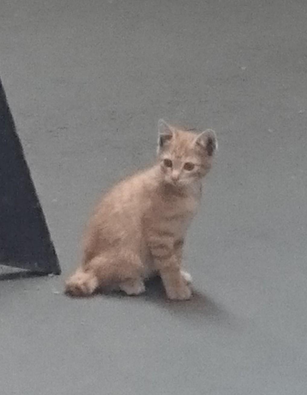とら猫? ミャ~様