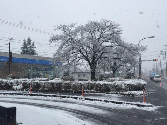 小山市 雪情報