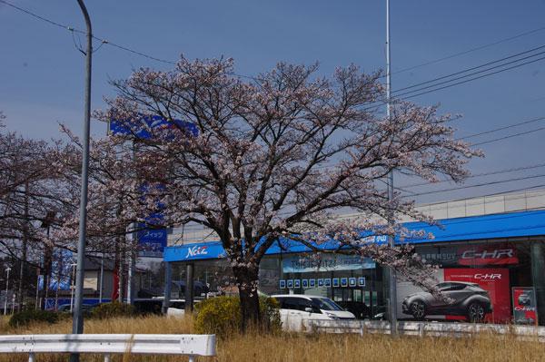 桜 小山市喜沢 2017.4.5